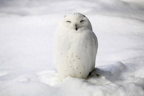 降雪と積雪